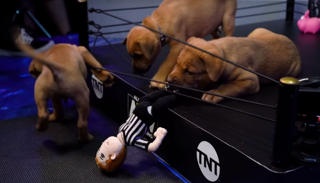 Résultats du AEW Puppy Battle Royale